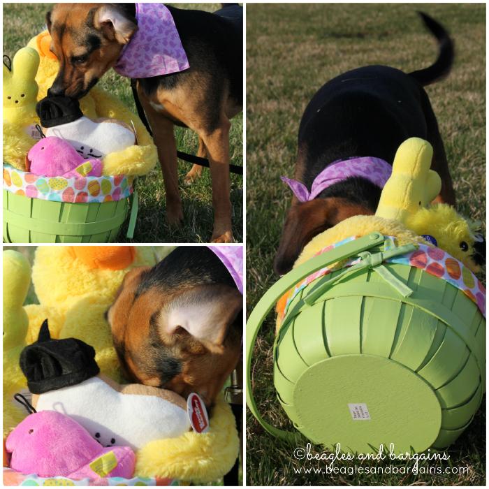 Luna enjoys her Easter Basket
