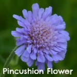 P-pincushion2