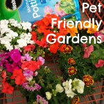 How to Plant a Pet Friendly Garden