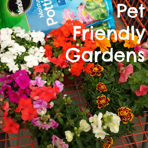 Pet Friendly Gardens