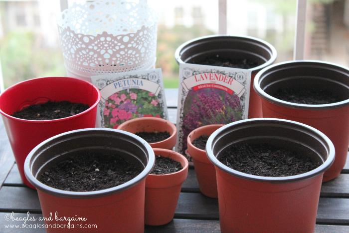Planting Lavender and Petunias