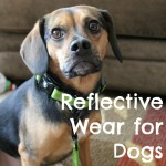 R is for Reflective Dog Wear #atozchallenge