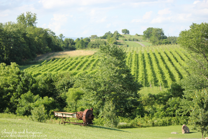 Scenic View at Barrel Oak Winery.