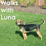 W is for Walks with Luna #atozchallenge