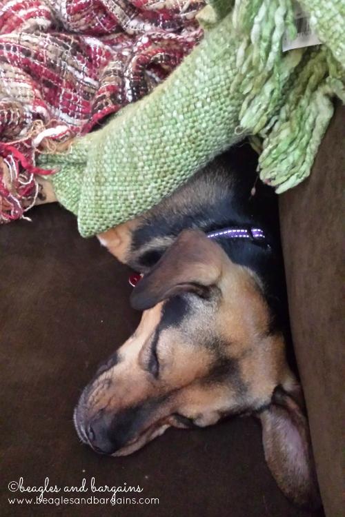 Luna enjoys a nap