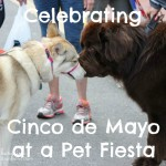 Celebrating Cinco de Mayo at a Pet Fiesta
