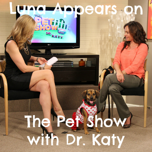 Luna appears on The Pet Show with Dr. Katy