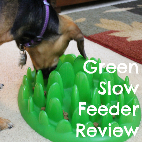how to make a dog eat slower