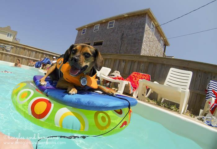 Luna enjoys a dip in the pool