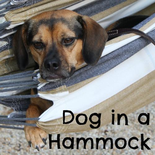 Dog in a Hammock