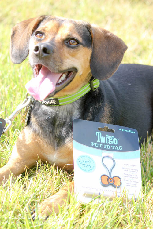 Luna is thrilled to try out Twigo Tags