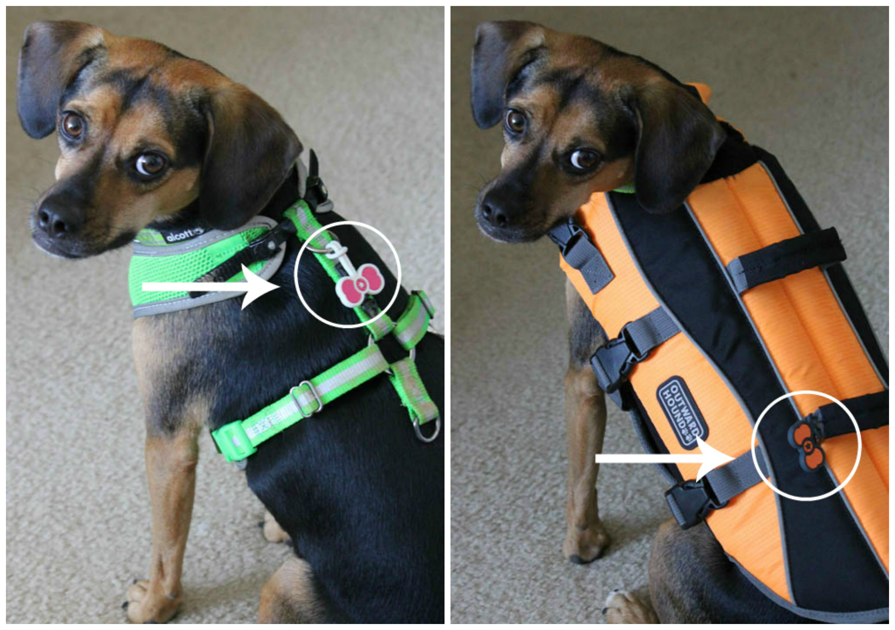 Luna wears her Twigo Tags on her harness and life jacket.