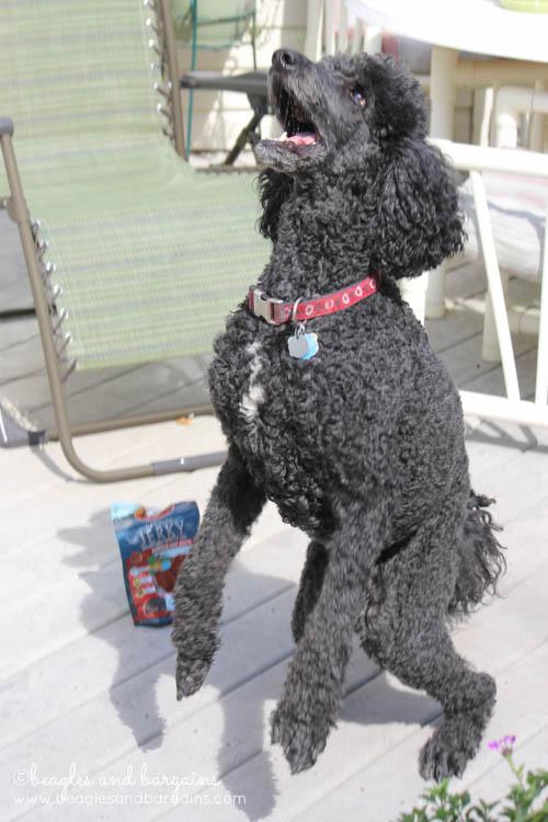 Keto jumps for Zuke's Genuine Jerky!