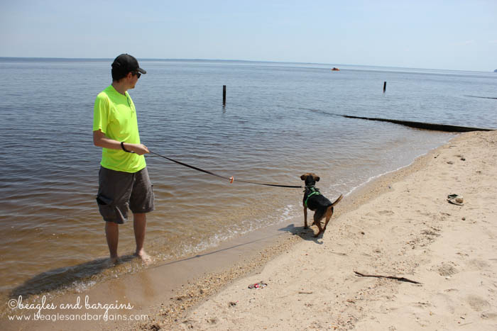 Luna visits the beach at Westmoreland State Park.