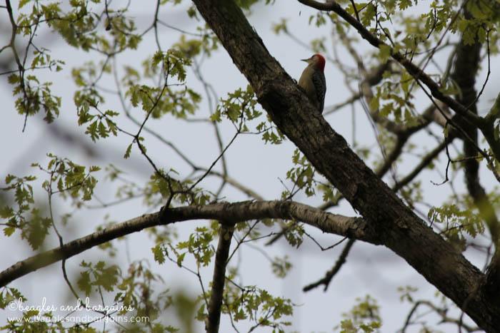 Wildlife seen while hiking in Northern Virginia