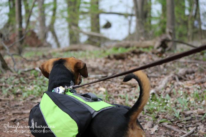 Luna hikes Red Rock Overlook Regional Park - Hiking in Northern Virginia