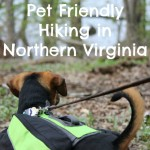 Pet Friendly Hiking in Northern Virginia