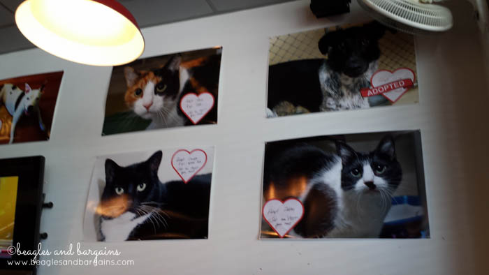 Adoptable pets at MELT Gourmet Cheeseburgers