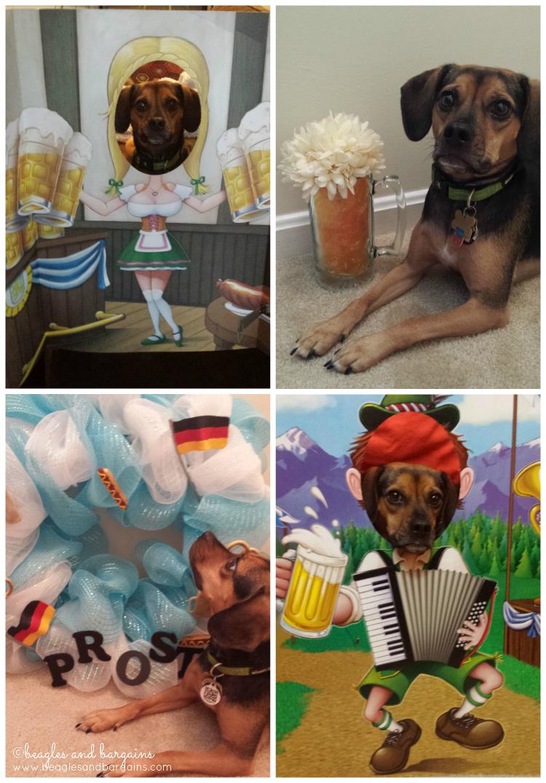 Luna celebrates Oktoberfest and Barktoberfest!