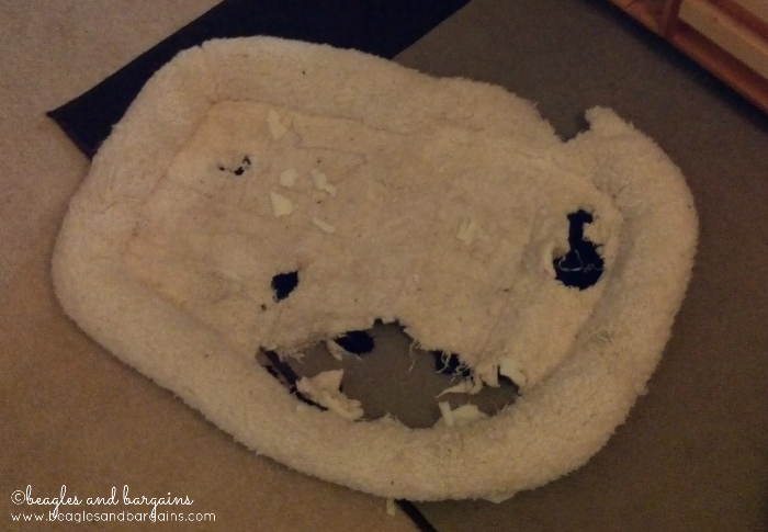 Luna's destroyed bed
