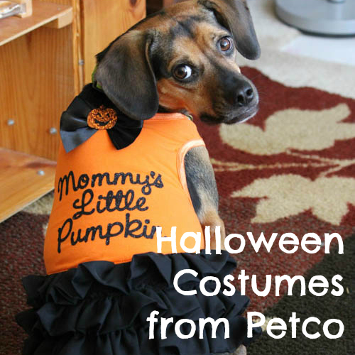 Halloween Costumes from Petco