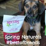 Spring Naturals #BestOfBreeds Features Beagles