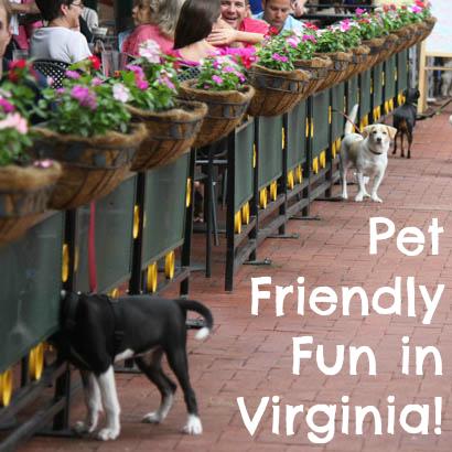 Pet Friendly Fun in Virginia