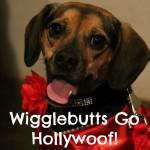 Luna Packs Her Wigglebutt and Visits Hollywoof!