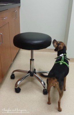 Vet appointment