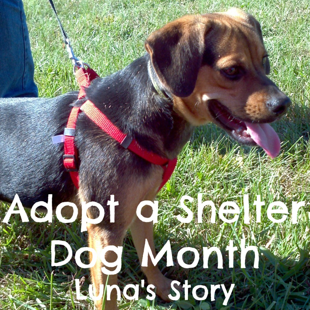 Adopt a Shelter Dog Month - Luna's Story