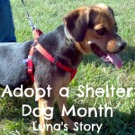 Adopt a Shelter Dog Month – Luna's Story