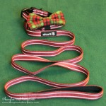 Alcott Reflective Leash and Collar
