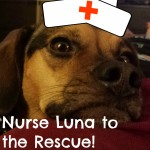 Nurse Luna to the Rescue!