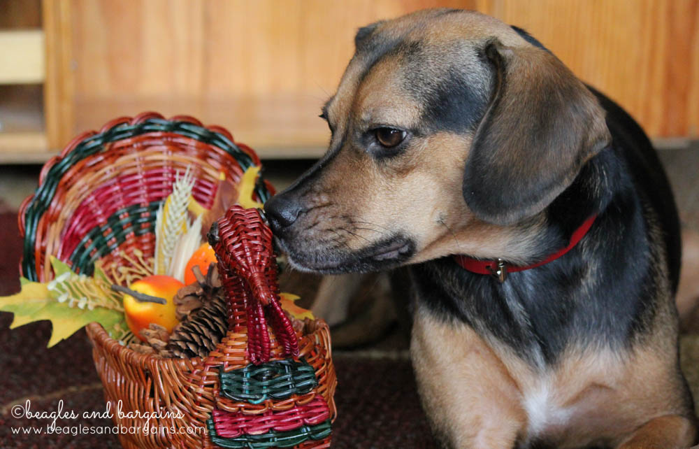 Have a Happy and Safe Thanksgiving from Luna!