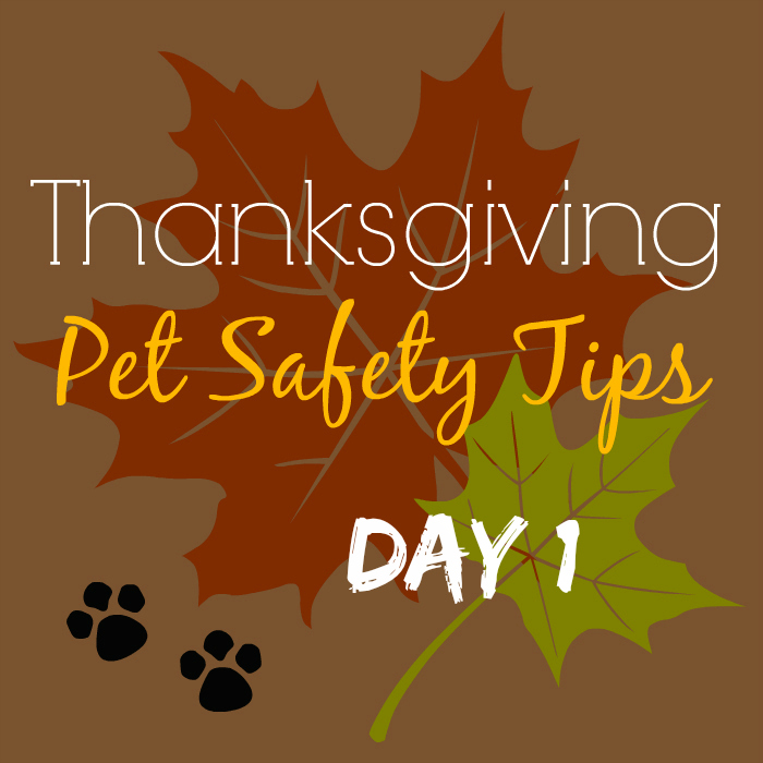 Thanksgiving Pet Safety Tips