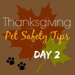 Possible Thanksgiving Hazards for Pets