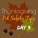 Tips for a Successful Pet Safe Thanksgiving Holiday