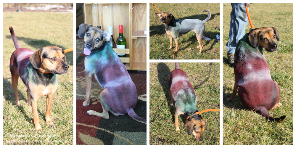 Luna as a Christmas Elf with Pet Paint