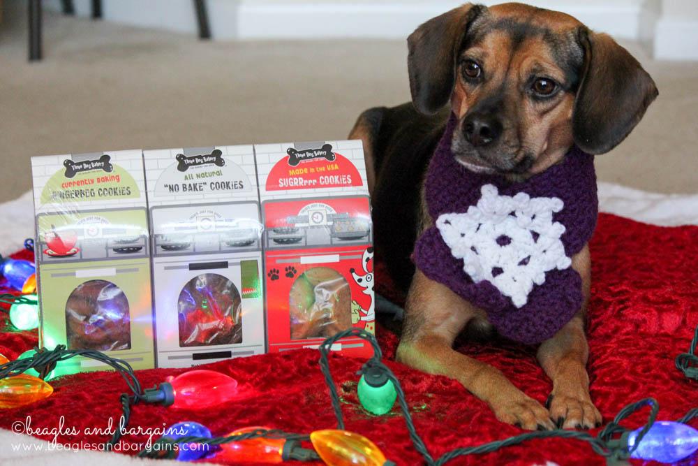 Luna with Three Dog Bakery Christmas Cookie Trio