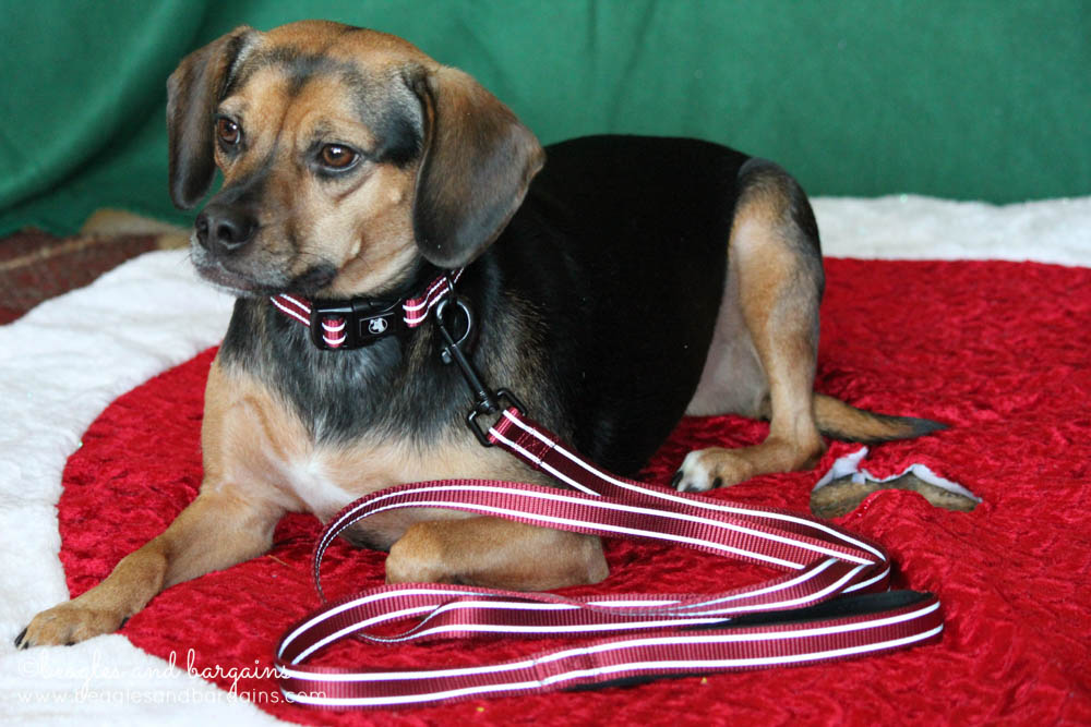 Luna with an Alcott Leash and Collar