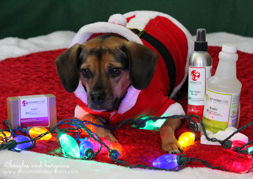 Luna with Wondercide Natural Skin Care for Dogs
