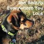 See Beauty Everywhere You Look
