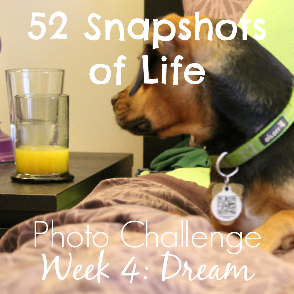 52 Snapshots of Life: - Photo Challenge - Week 4: Dream