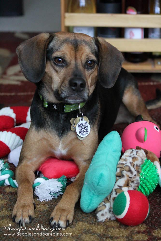 52 Snapshots of Life: JOYFUL - Luna enjoys pile of dog toys