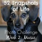 Music to My Beagle Ears