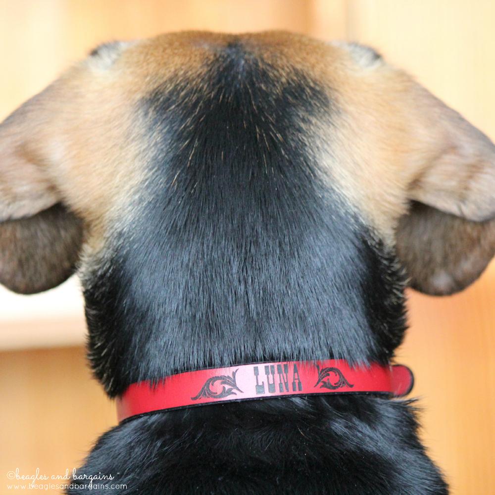 52 Snapshots of Life: NEW - Luna's new collar