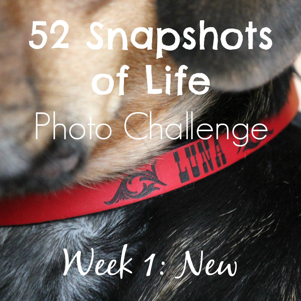 52 Snapshots of Life Week 1: NEW