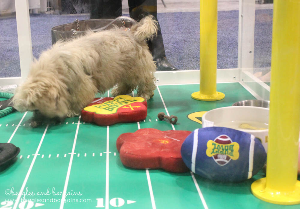 The Puppy Bowl at the Global Pet Expo in 2014