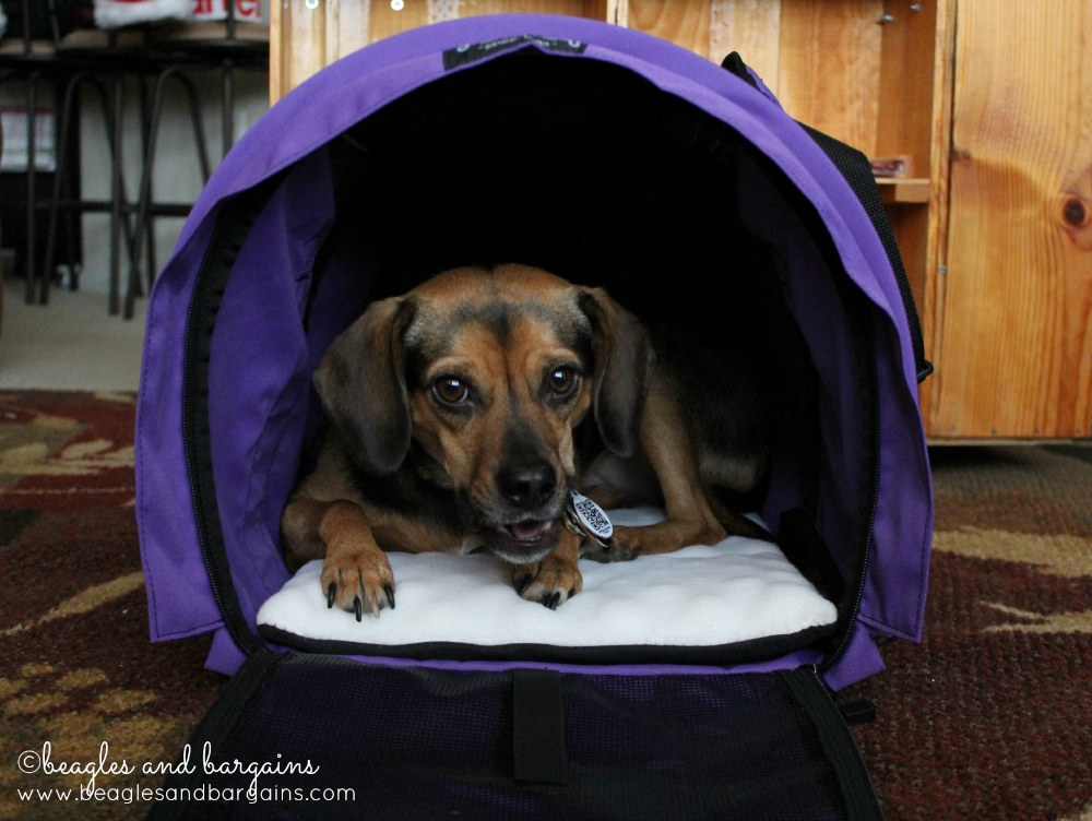Luna tries out the SturdiBag XL by Sturdi Products