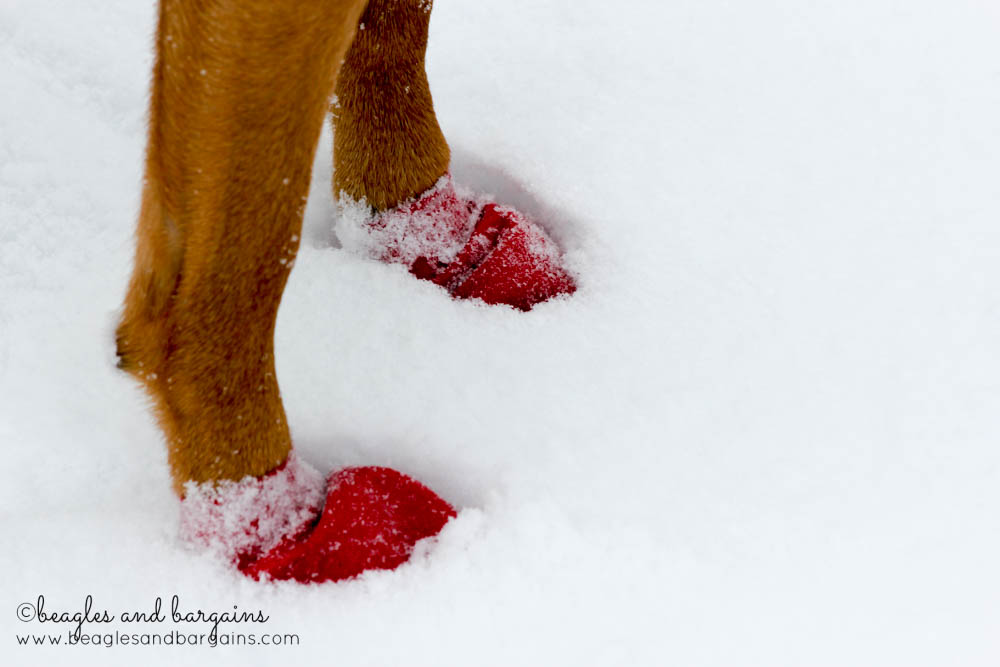 52 Snapshots of Life: WINTER - Luna wearing Pawz in the snow